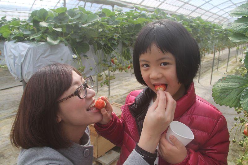 子どもさん連れにおすすめ!!香川「森のいちご」で大自然の中でのイチゴ狩りはいかが?