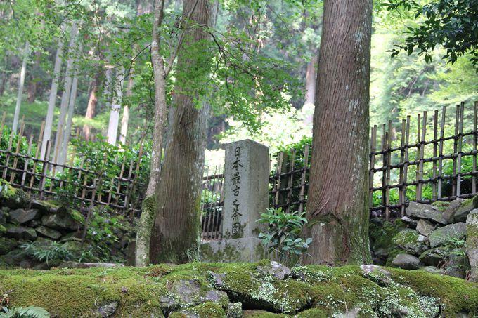 """高山寺は日本茶文化の故郷!""""日本最古の茶園"""""""