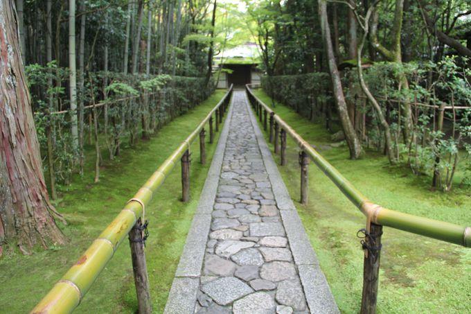 細川忠興とガラシャ夫人の墓もある「高桐院」はカエデに覆われた参道が美しい!
