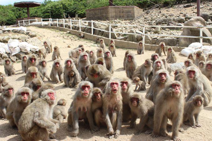 緑美しい景勝地「銚子渓」で500匹の可愛いお猿さんと遊ぼう!
