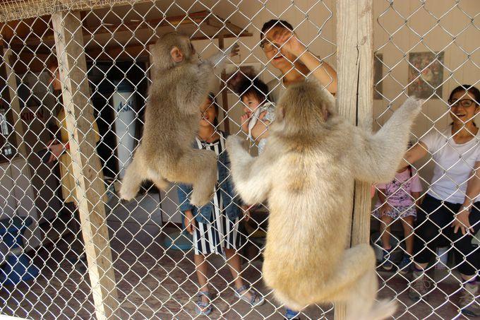 迫力満点!お猿さんのド・アップを楽しめる小屋の中からの「エサやり」はいかが!?