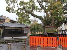 世界遺産「上賀茂神社」の社家町には驚きグルメや見どころが満載!