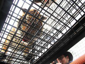 姫路セントラルパーク「冒険ライド」は動物との距離がめちゃ近い!