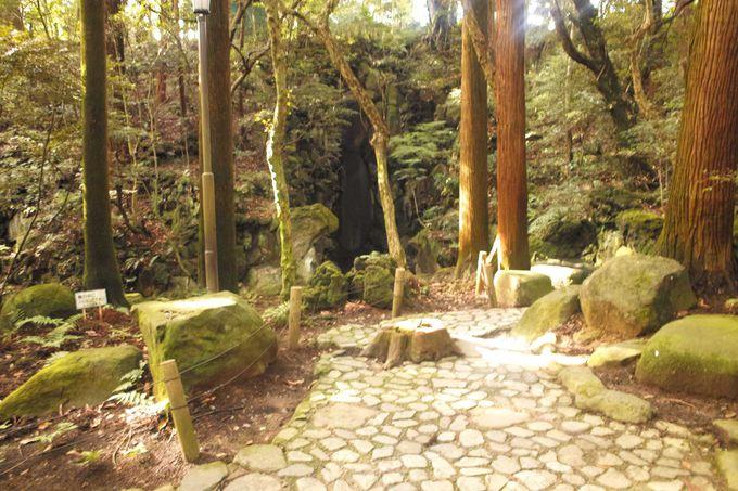 成田山公園で心の中から浄化する