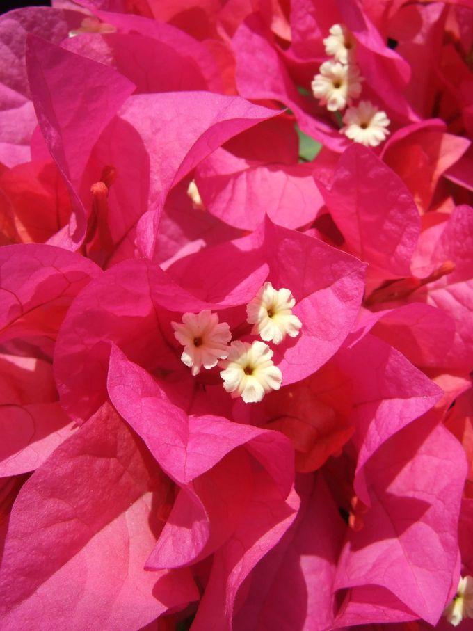 ザ・沖縄の花