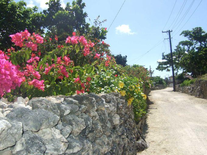 鮮やかな花々と石垣の風景