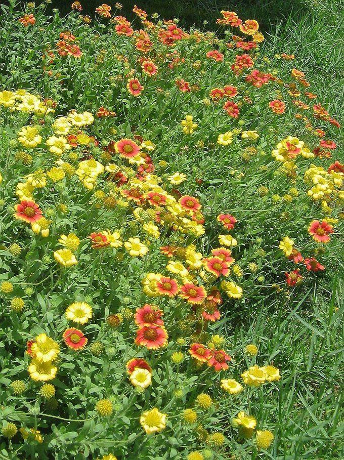 四季折々の草花も楽しみたい散歩道