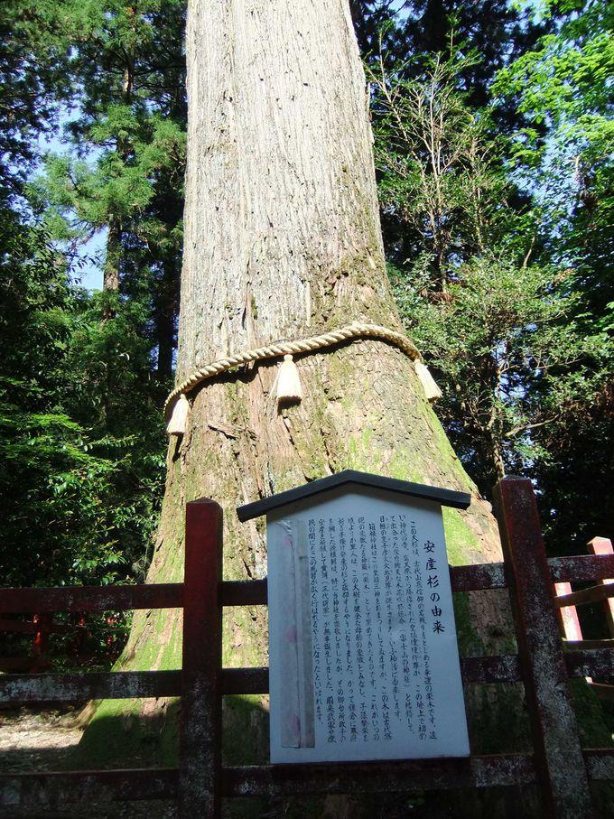 幸運の安産杉と縁結びで最近話題の九頭龍神社