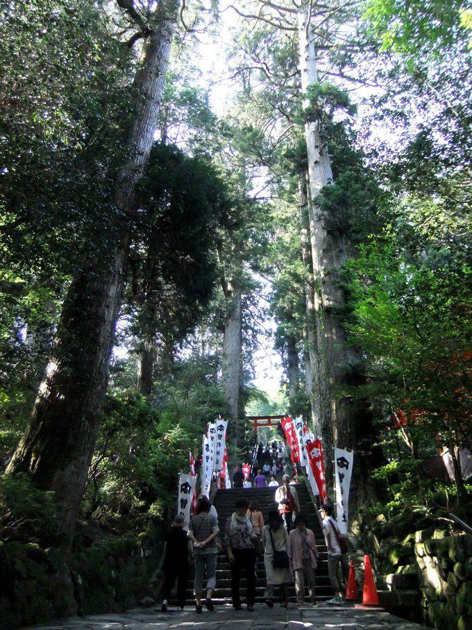 運開きの神様が御鎮座されている箱根神社