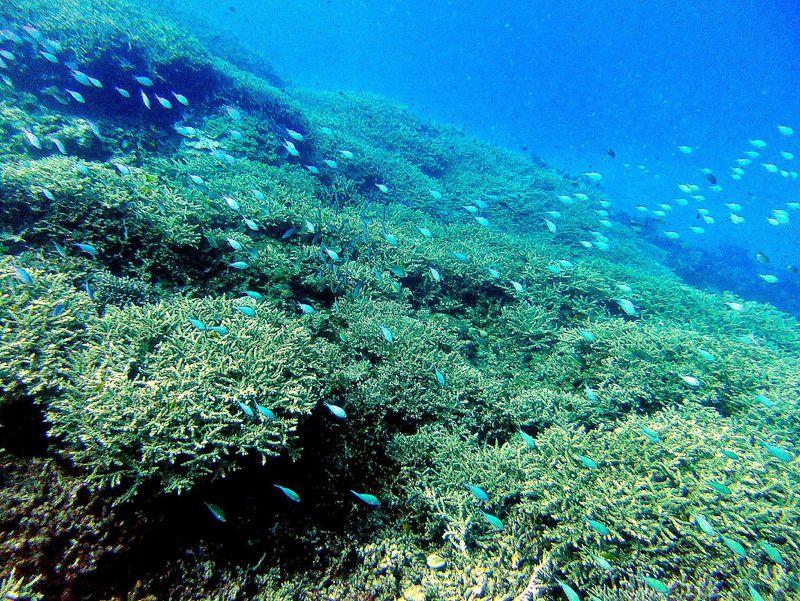 世界屈指の透明度!沖縄ケラマ諸島で感動ダイビング!