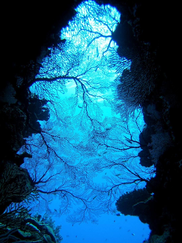 ケラマの海は景観もたっぷりと楽しめる!