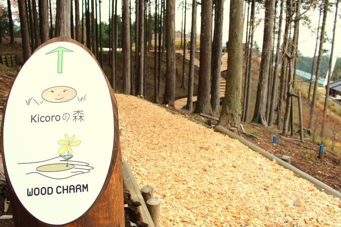 さあ、Kicoroの森を楽しもう!