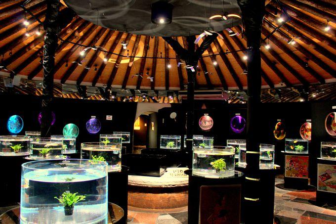 時之栖美術館「水中楽園アクアリウム」で癒しの時間を