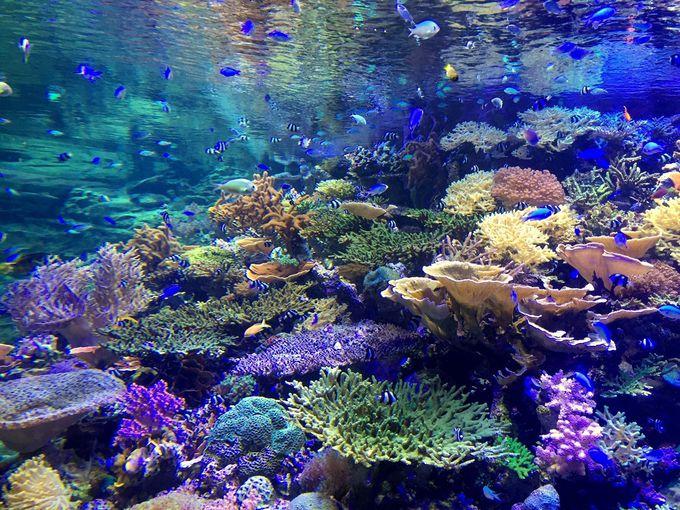 見事な生きたサンゴとカラフルな魚達が泳ぐ「ライブコーラル」
