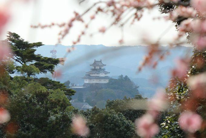 遠くに東海の名城「掛川城」を眺める