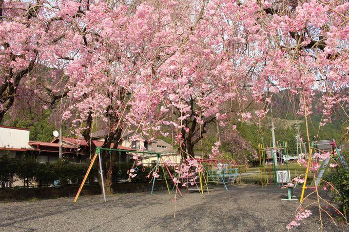 愛宕地蔵堂のしだれ桜もすばらしい