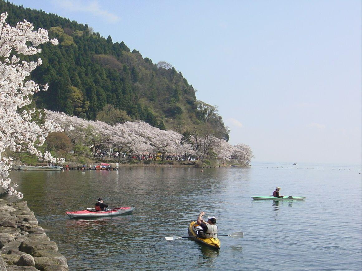 アクセスはバスがおススメ。バスを降りたらキラキラ輝く琵琶湖と800本の桜のトンネルがお出迎え!