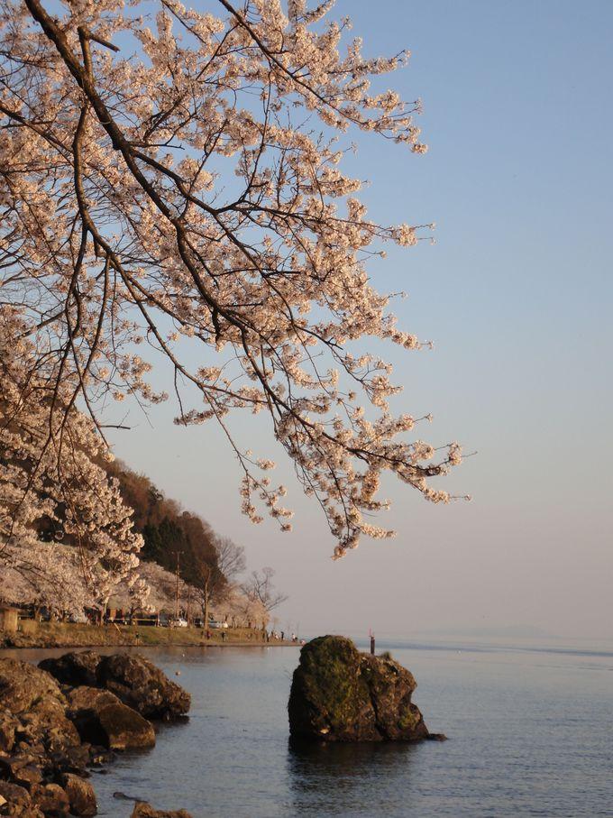 桜を眺めながら遊歩道をのんびりハイキング