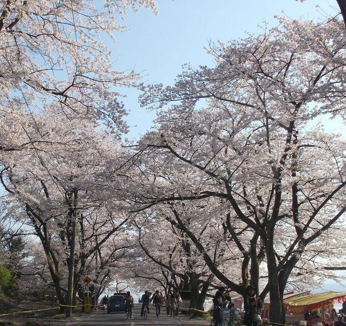 お昼はレジャーシート持参で花見弁当を食べよう!