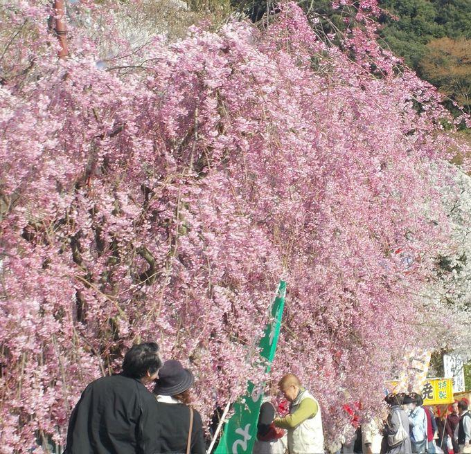 遊歩道のゴール、大崎寺にもぜひ立ち寄ってみて!