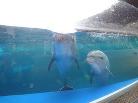 公園の緑を借景にした開放感!「京都水族館」と梅小路公園で遊ぼう!