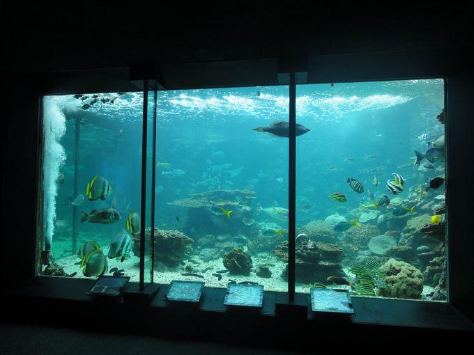 まずは水族館へ!展示されているのは全て串本の海にいる生物だけ!