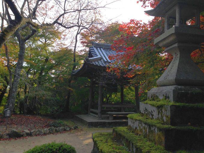 西行桜に鏡石、西行法師が愛した木々を眺め歴史に思いを馳せる!