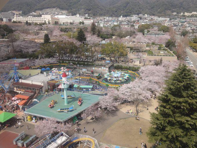 超オススメ!観覧車から桜いっぱいの園内を見渡そう!