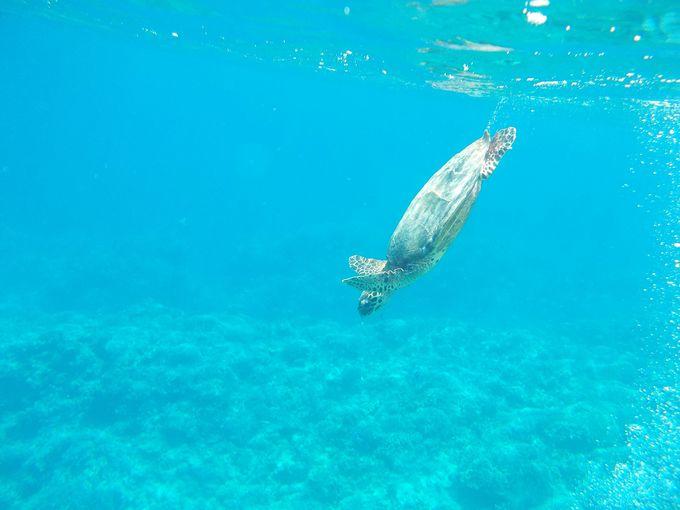 色鮮やかな珊瑚や熱帯魚、ウミガメに出会える可能性大!