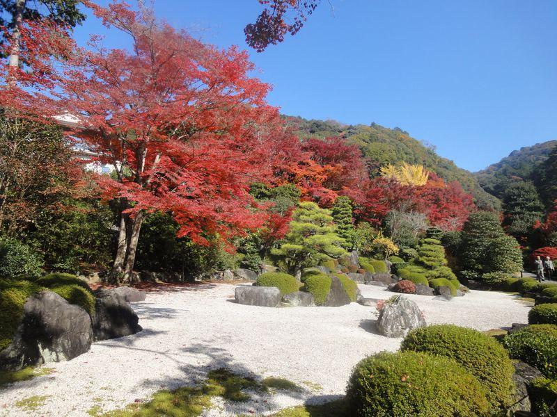 実は紅葉の名所!京都・宇治の花の寺「三室戸寺」でゆったり紅葉散策