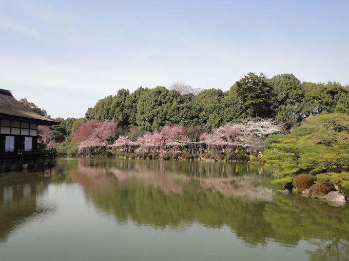 栖鳳池の周囲は特に日本庭園の美しさが感じられる絶好の撮影スポット!