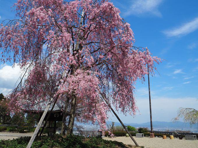 京都市街が一望できる眺望も魅力!境内は順路通りに廻ると30〜40分