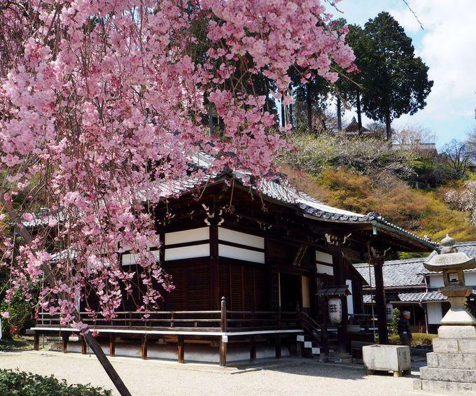 善峯寺の桜の見頃は