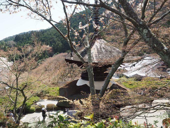 樹齢600年!全長37mの天然記念物「遊龍の松」が有名!