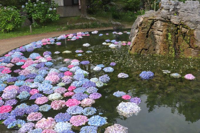 具足池に浮かべられた幻想的なあじさいにうっとり
