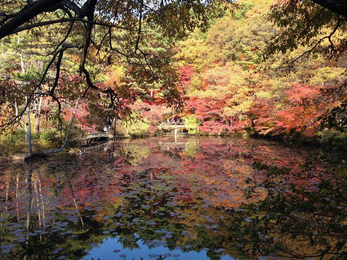園の中心、長谷池は必見スポット!まるで絵画のよう!
