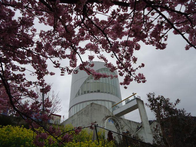 河津桜を眺めながらの食事も可能