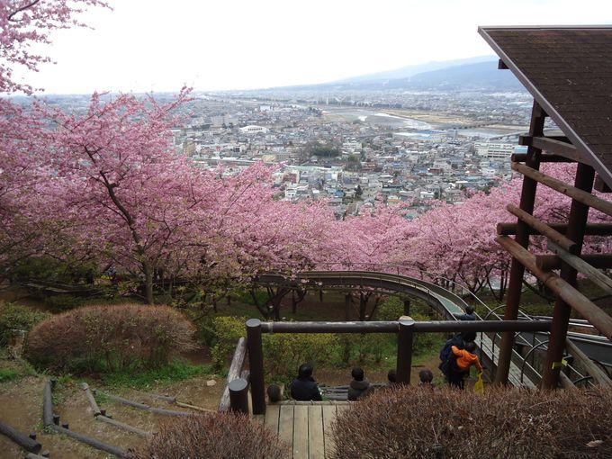 河津桜の間から眺める絶景