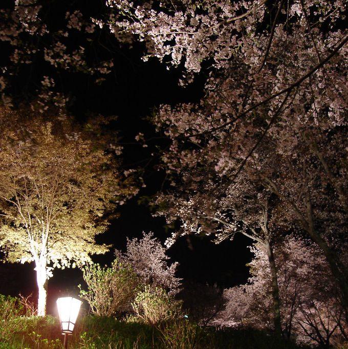 桜の散策を愉しむ下千本エリア