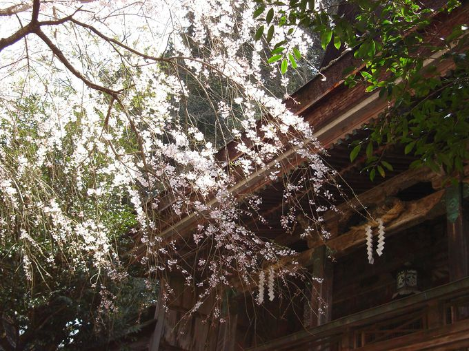 竹林院群芳園、吉野水分(みくまり)神社は外せない上千本エリア