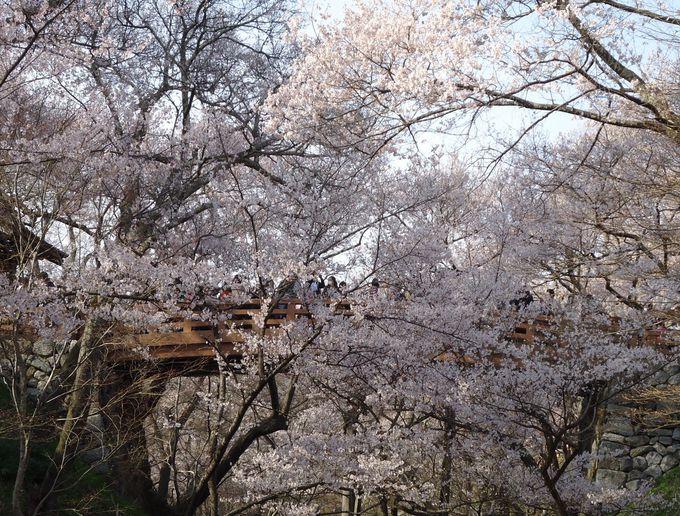 桜にかかる橋その名も「桜雲橋」