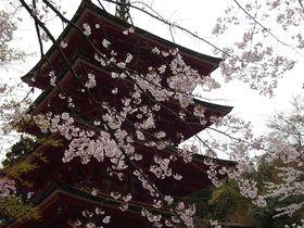 古寺と桜の饗宴!奈良の「大野寺・長谷寺・談山神社」巡り