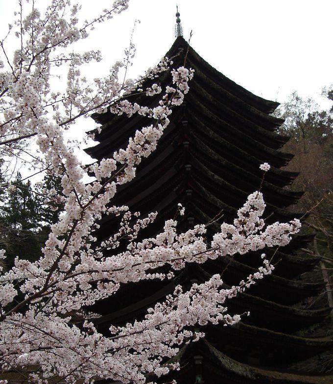 世界唯一・木造十三重塔と桜のコントラストが美しい談山神社