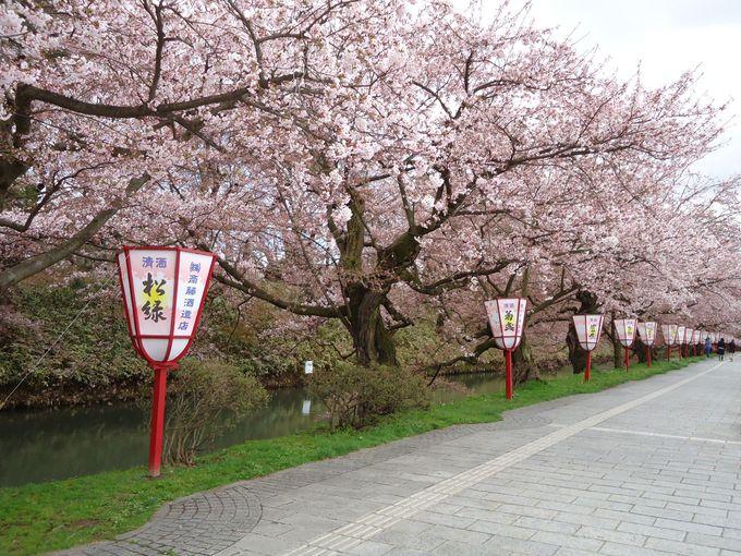 水濠が見せる桜の美しさ