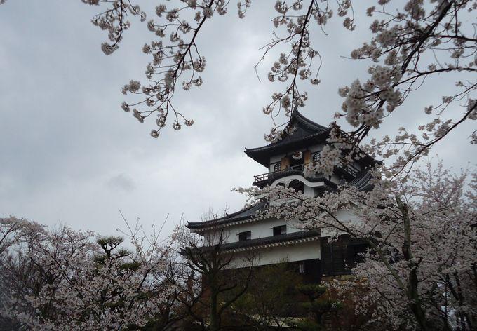 400本の桜と国宝犬山城