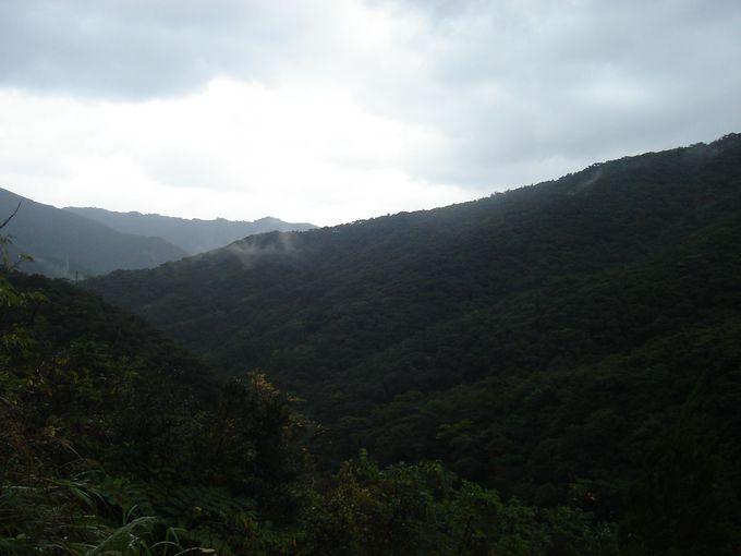 金作原原生林へは、観光ガイド会社主催のネイチャーツアーがお勧め