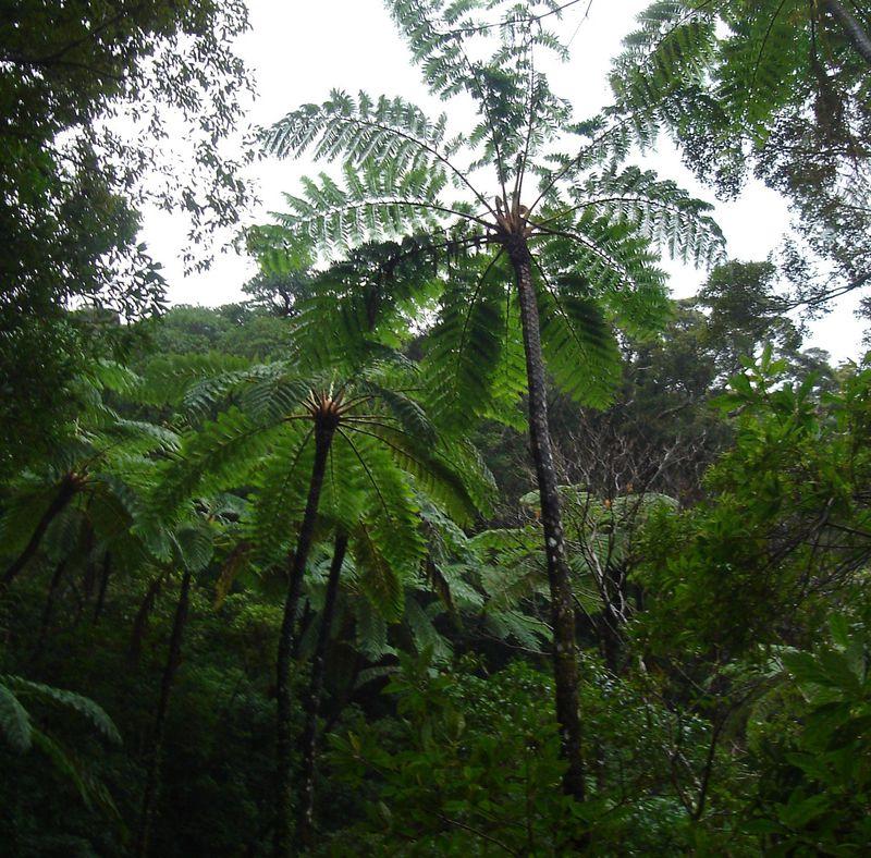 太古の時代にタイムスリップ?奄美大島の金作原原生林