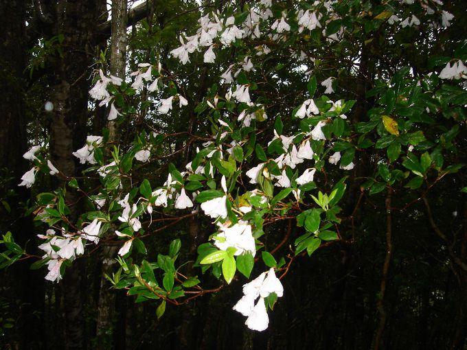 亜熱帯の珍しい木や花