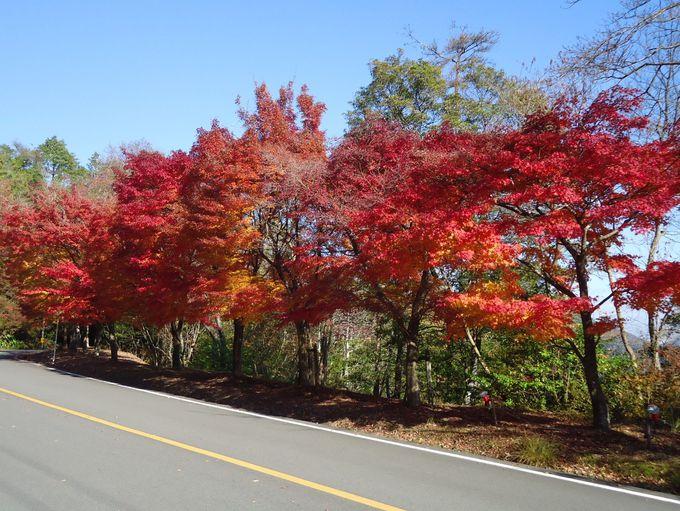 紅葉が美しい「高雄パークウエイ」