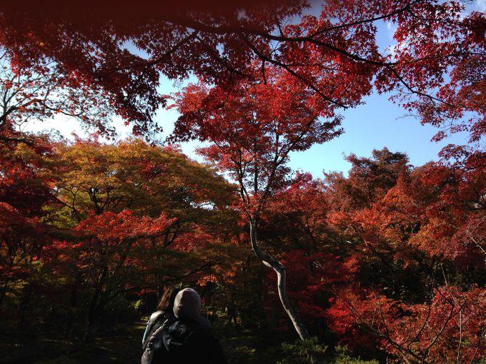輝くような紅葉が美しい!絶対に外せない宝筐院